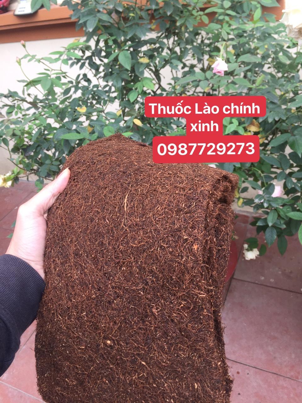thuốc lào mộc rừng Chính Xinh